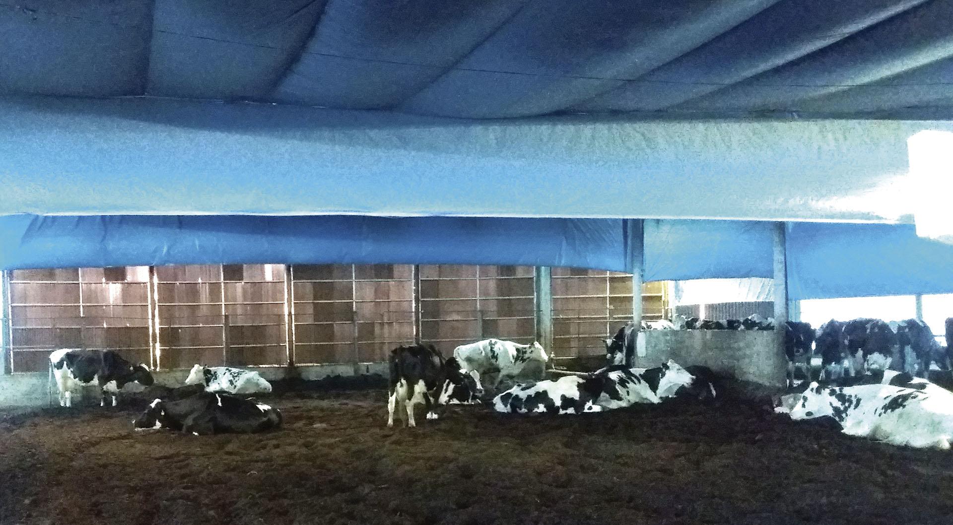 revista-balde-branco-compost-barn-01b-ed670